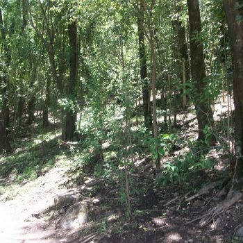 Bosque Acasi